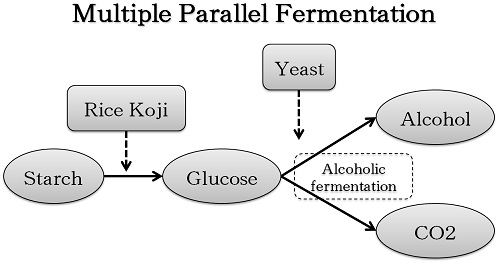 Multiple Parallel Fermentation